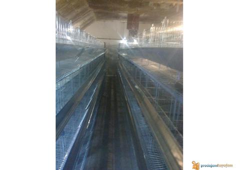 Kavezi za koke nosilje - proizvodnja i prodaja kaveza za koke nosilje