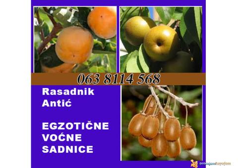 Najkvalitetnije sadnice voca u Srbiji