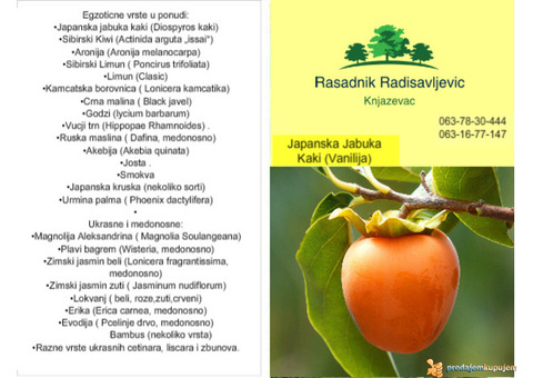 Japanska jabuka kaki sadnice