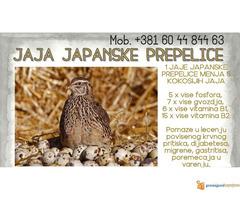 Jaja japanskih prepelica (oplodjena)