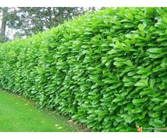 Živa ograda, travnjak.. (šišanje, košenje..) - Baštovanske u...