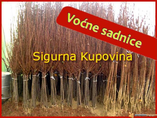 Voćne sadnice - Sigurna Kupovina - 2/2