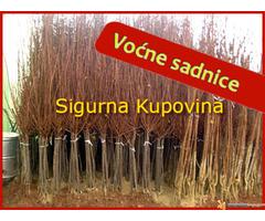 Voćne sadnice - Sigurna Kupovina - Slika 2/2