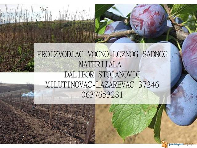 Rasadnik STOJANOVIC-VOCNE SADNICE - 4/4
