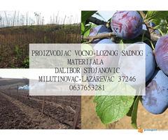 Rasadnik STOJANOVIC-VOCNE SADNICE - Slika 4/4