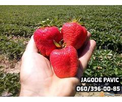 Plantaze Jagoda Pavic - Slika 1/4