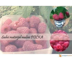 SADNICE MALINE POLANA I POLKA - Slika 5/5