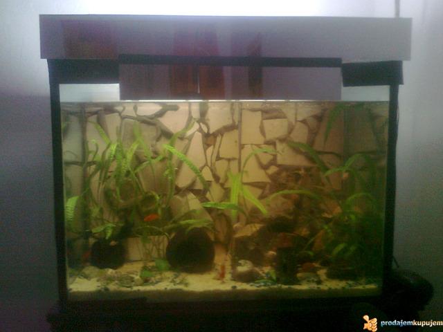 Potpuno opremljen akvarijum od 150l sa ribicama - 1/3