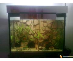 Potpuno opremljen akvarijum od 150l sa ribicama