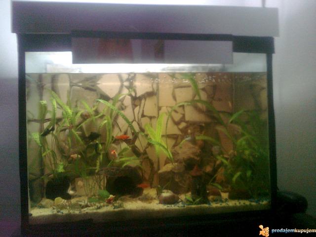 Potpuno opremljen akvarijum od 150l sa ribicama - 2/3
