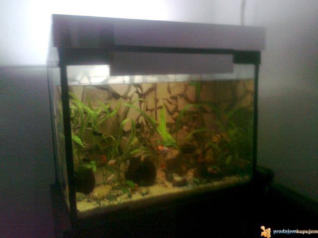 Potpuno opremljen akvarijum od 150l sa ribicama - 3/3