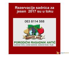 Odlična predprodaja sadnica voća - super cena - Slika 1/2