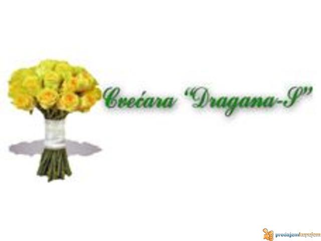 Cvecara Dragana S - 6/6