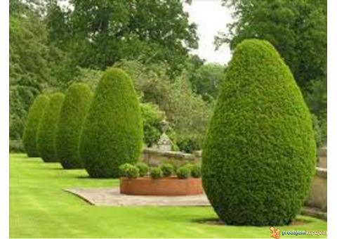 Hortikultura-Baštovanstvo (Obavljanje usluge uređenja i održavanja vrta)