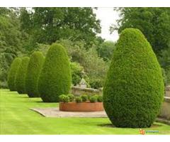 Hortikultura-Baštovanstvo (Obavljanje usluge uređenja i održ...