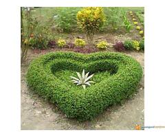 Hortikultura-Baštovanstvo (Obavljanje usluge uređenja i održavanja vrta) - Slika 5/7