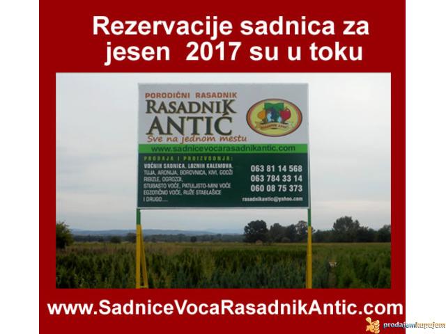 Najbolja cena za ugovaranje sadnica voća i vinove loze...za Jesen 2017 - 1/2
