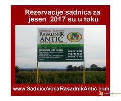 Najbolja cena za ugovaranje sadnica voća i vinove loze...za Jesen 2017
