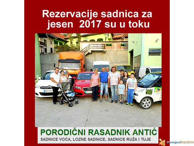 Najbolja cena za ugovaranje sadnica voća i vinove loze...za Jesen 2017 - 2/2