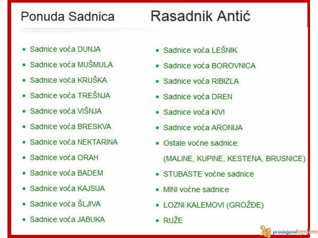 Sadnice voća - hit jesenja cena u Rasadniku Antić - 2/2