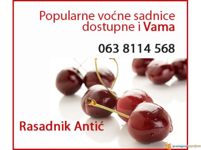 Najbolje voćne egzotične sadnice - 2/2