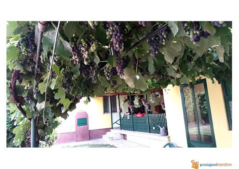 Kuća u Čurugu seoska idila za uživanje