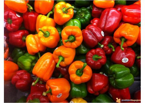 Sadnice povrća